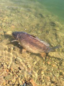 Le acque limpide sono il luogo giusto in cui pescare con le pop-up washed out.